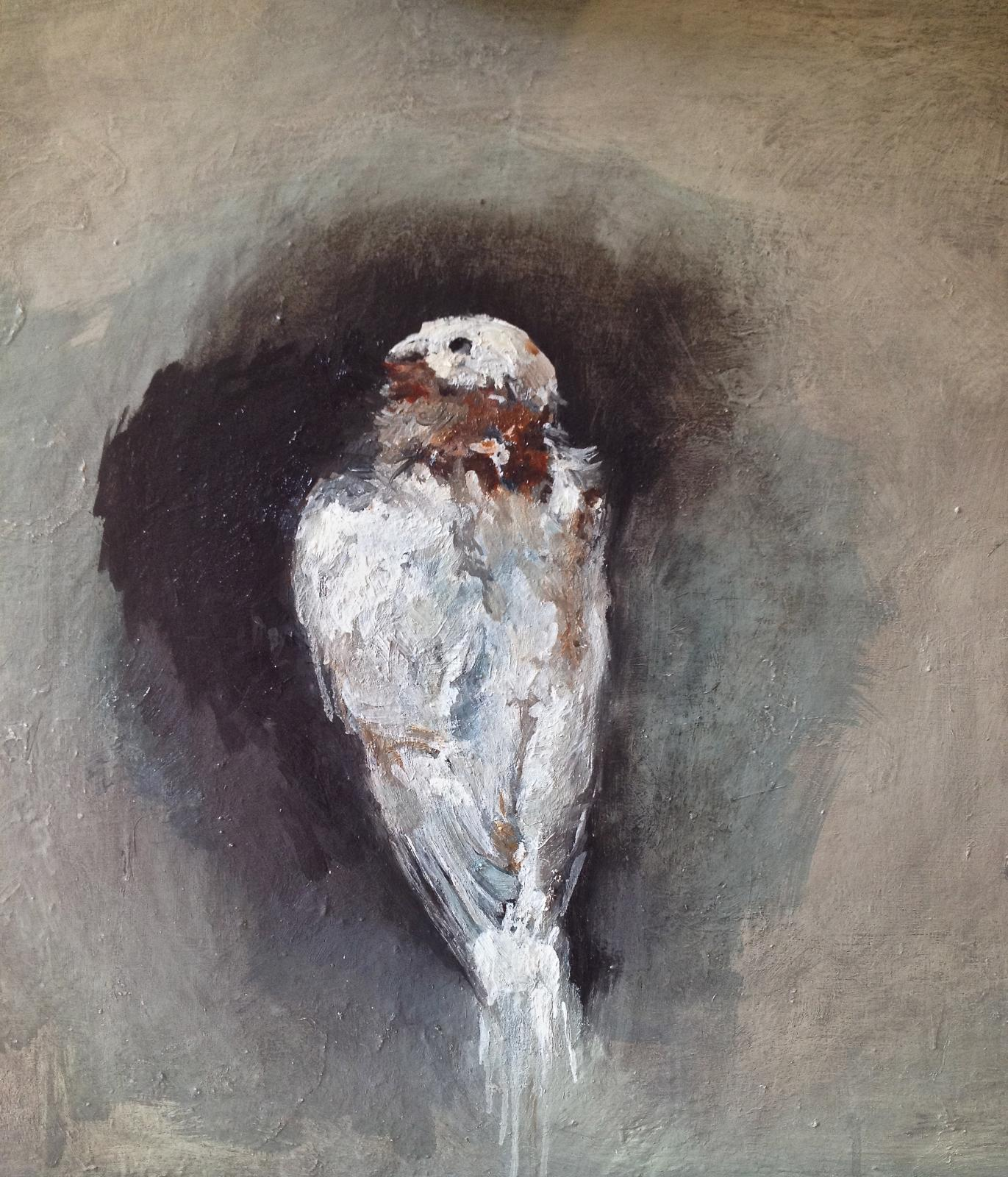 Dove 70cm x 70cm oil/canvas nzlDK1480675371.jpg